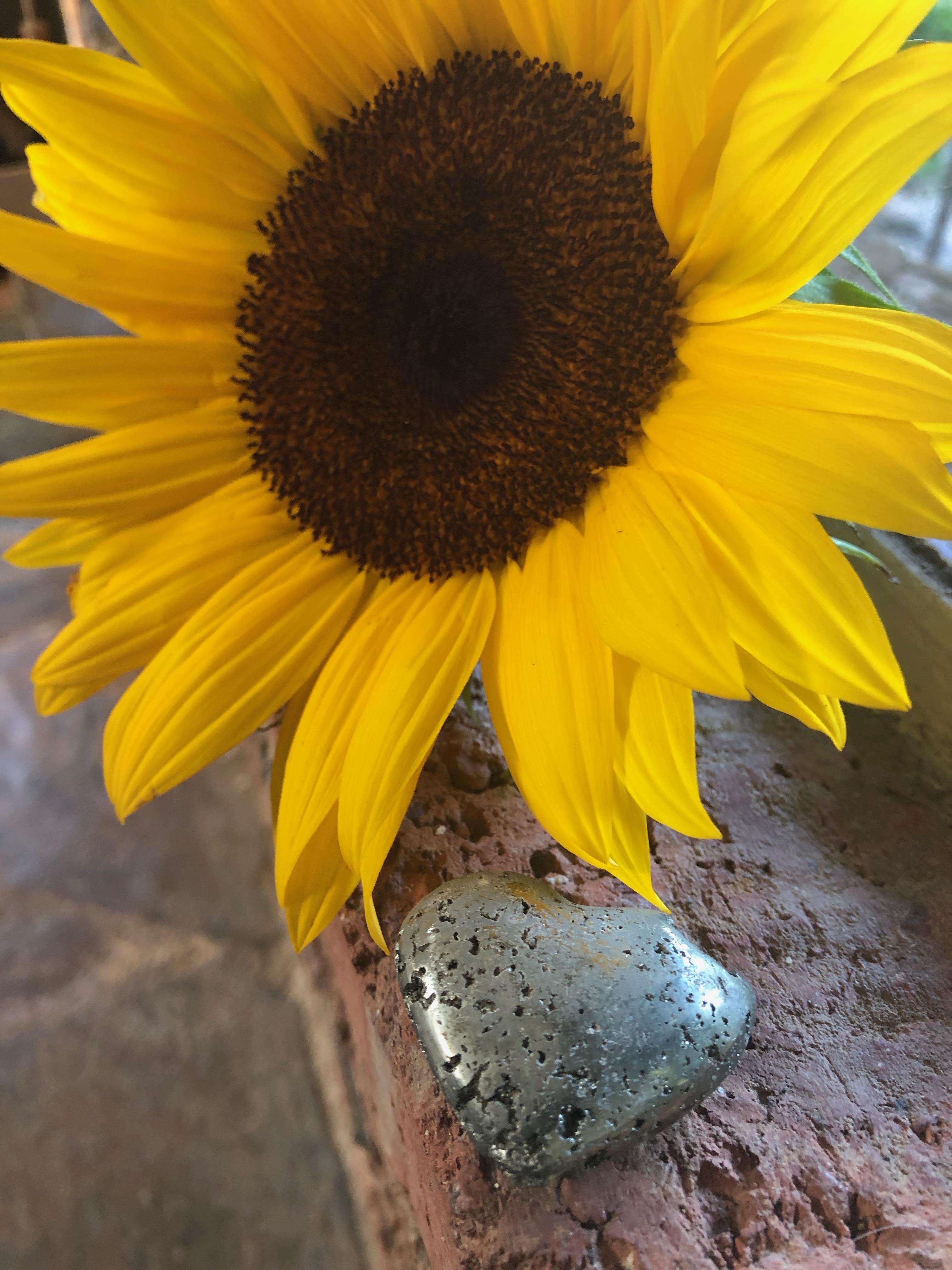 Enjoy The Sunflowers